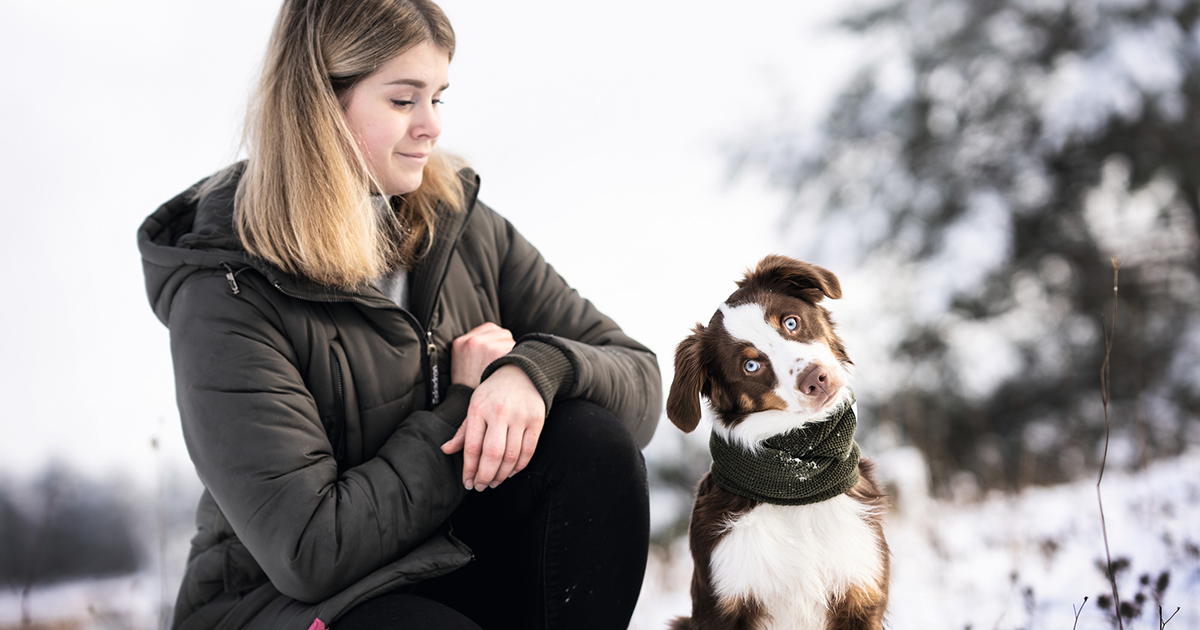 Calming signals - the basics of dog communication every dog lover should know