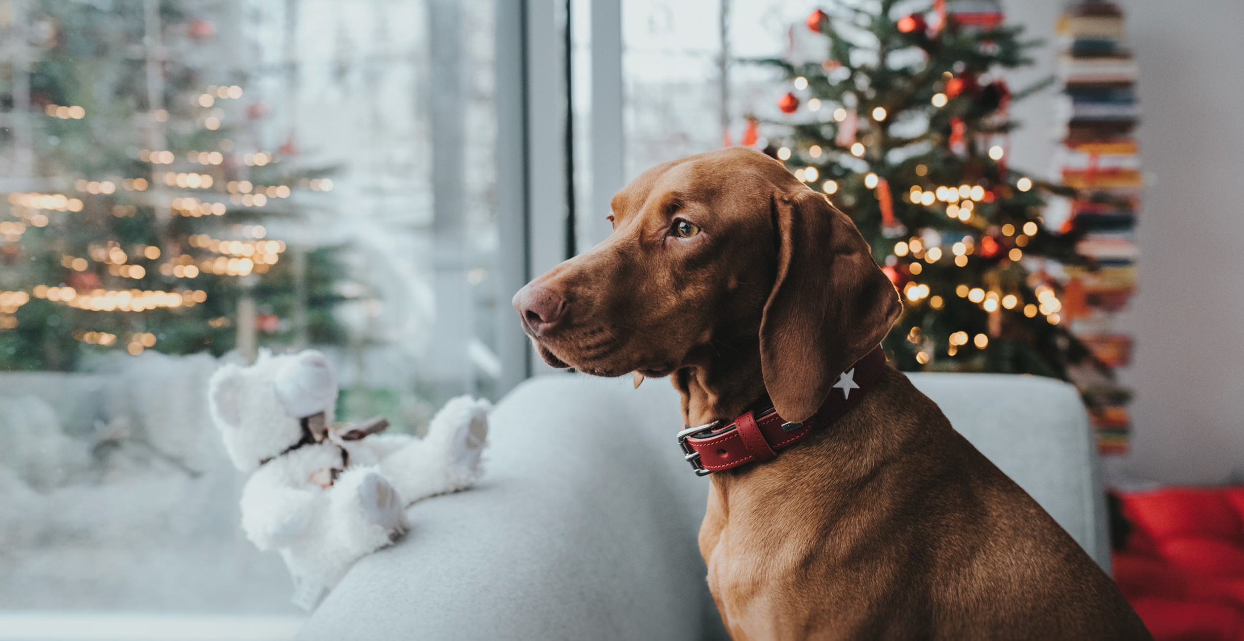 Gifts for pets with great discount of 20 %
